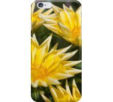 aster flower in the garden iPhone Case/Skin
