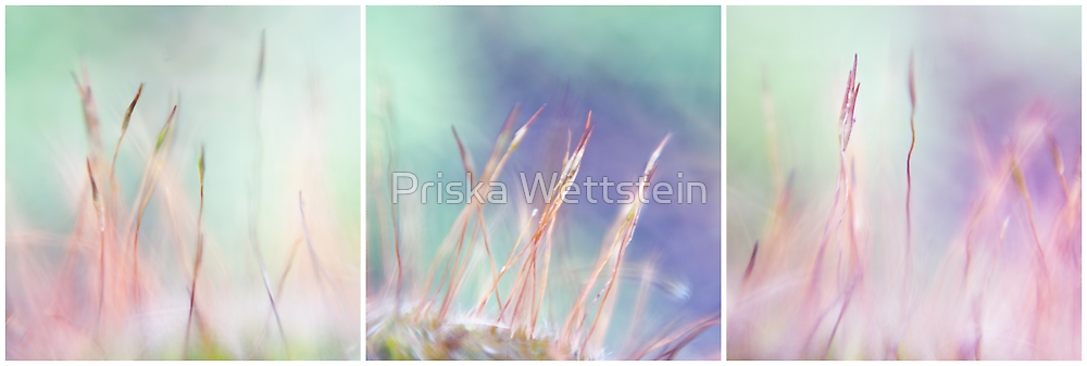 color me a rainbow by Priska Wettstein