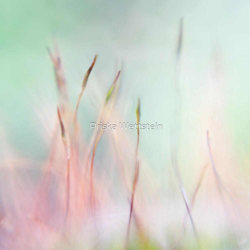 Reaching for colors II by Priska Wettstein