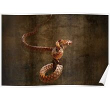 "'Brown Tree snake"" Poster"