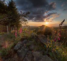 Roseberry Foxgloves II by Ripley