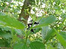 Frisky Squash Bugs by Marcia Rubin