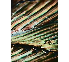Furrows Photographic Print