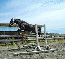 First Stallion (Jumps) by James Zickmantel