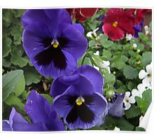 Purple Pansies Poster