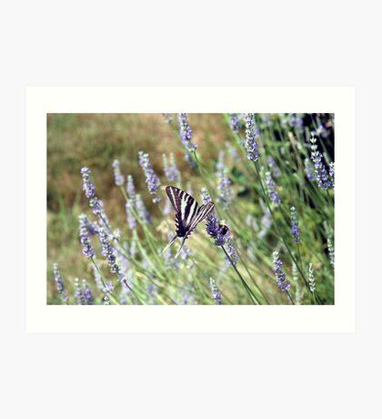 Lavender Zebra 4 Art Print