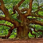 Angel Oak Tree by Alison Simpson