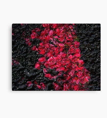 Blossoms ! Canvas Print