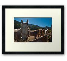 Mountain Horses Enjoying Summer Framed Print
