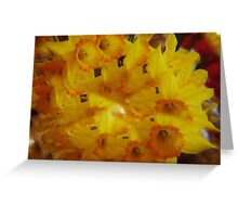 Daffodils thru a Prism Greeting Card