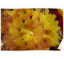 Daffodils thru a Prism Poster