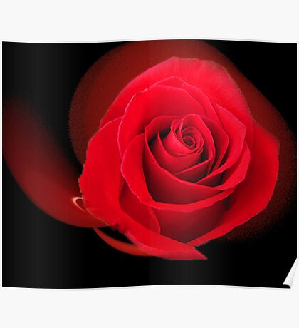 Red, Red Rose Poster