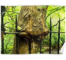 Tree fence Poster