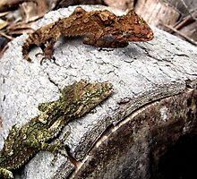 Leaf-Tailed Gecko Face-Off by Vanessa Barklay