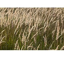 Grass in Autumn Photographic Print
