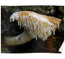 Spine Mushroom Poster