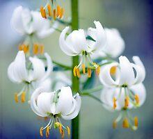Little white Turbans by Jacky Parker