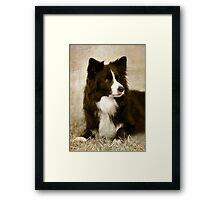 Soccer Dog 2 - border collie Framed Print