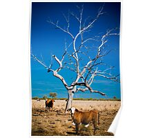 Forgotten Tree - Well Plains, QLD Poster