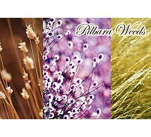 Pilbara Weeds Photographic Print