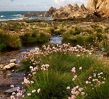 Springtime on the Rocks by Lorraine Parramore