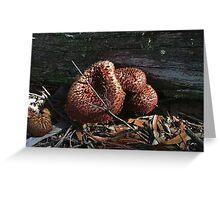 Shaggy mushroom - Kanangra Greeting Card