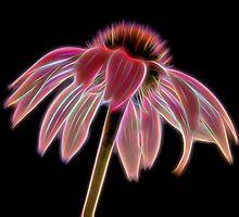Glowing Echinacea Flower by OblongBard