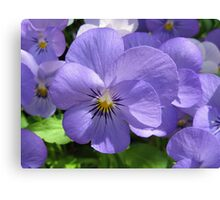 Pansies in the Park Canvas Print