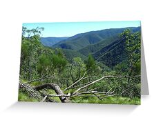 She-oak Hakea and the Kowmung Valley Greeting Card