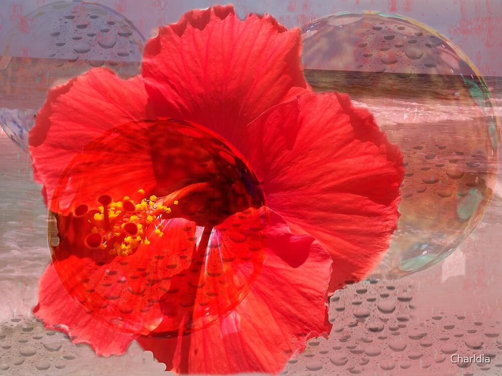 Beachy Bubbly Hibiscus by Charldia