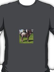 Miniature Shetland Foal T-Shirt