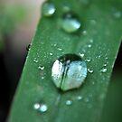 Morning Dew by Robin Black