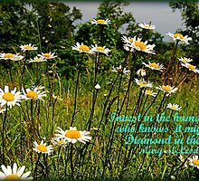 Daisies by Donna Anglin Husband