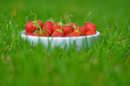 A bowl of simple pleasures by Michele Jensen