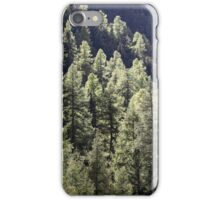 A larch forest in autumn iPhone Case/Skin