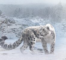 Snow Leopard in Winter by Norman Rawn