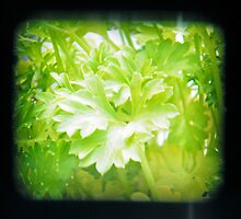 TTV Parsley (a first attempt) by Laura Kelk
