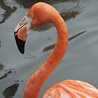 Flamingo by vivsworld