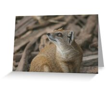 Mongoose in Budapest Zoo Greeting Card