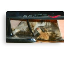Shelby Asleep in Curtains and Computer Canvas Print