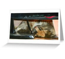 Shelby Asleep in Curtains and Computer Greeting Card