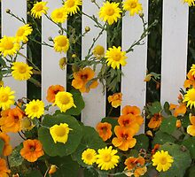 Nasturtium  and Daisies by Denice Breaux