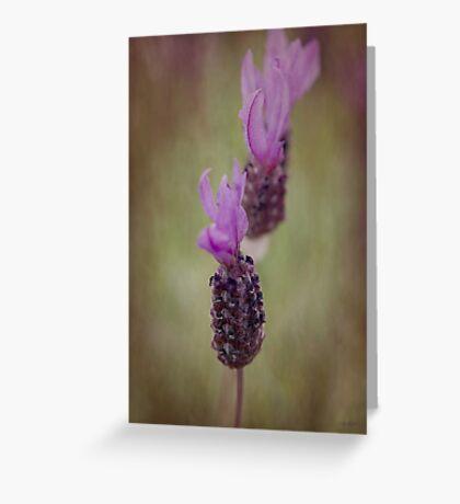 Lavender Trio Greeting Card