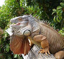 Iguana in a Tree by Robby Ticknor