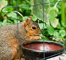 Squirrel Eating by Robby Ticknor