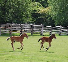 Two Standardbred Youngsters at Play by Dianne Grist