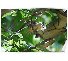 Iguana playing Hide and Seek Poster