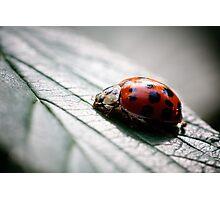Mrs Ladybird, going home Photographic Print