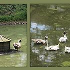 Goose Pond by missmoneypenny