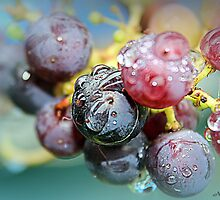 Grapes of Wrath by naturelover